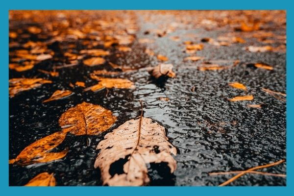 wet leaves in puddle